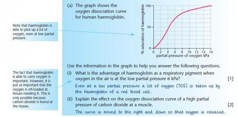 sample question and model answer