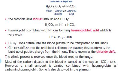 Carbonic anhydrase the fastest enzyme biology essay