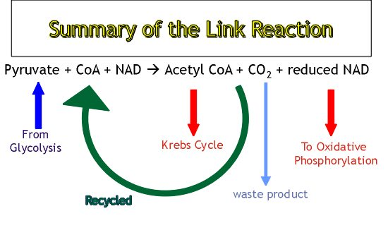 linkreaction