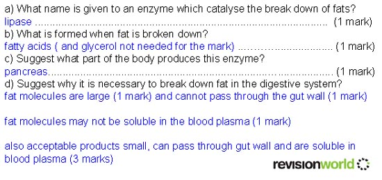 a2 biology coursework enzymes A level biology resources past paper questions coursework help welcome: this site is mainly for aqa(b) as & a2 (a level) biology, content is reached from the module links below there are extensive notes, summaries and past paper questions.