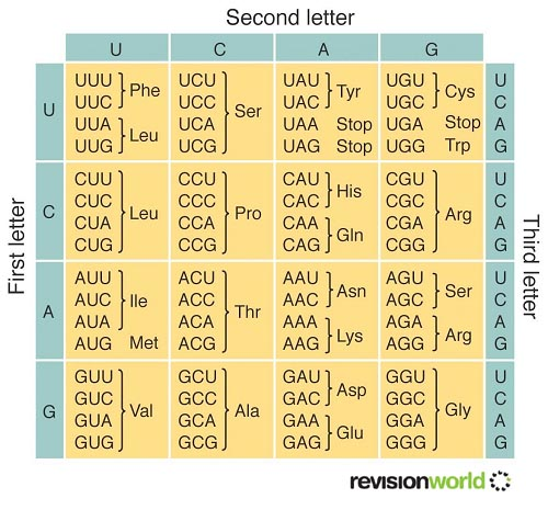 Genetic Code : a2-level-level-revision, biology, genes ...