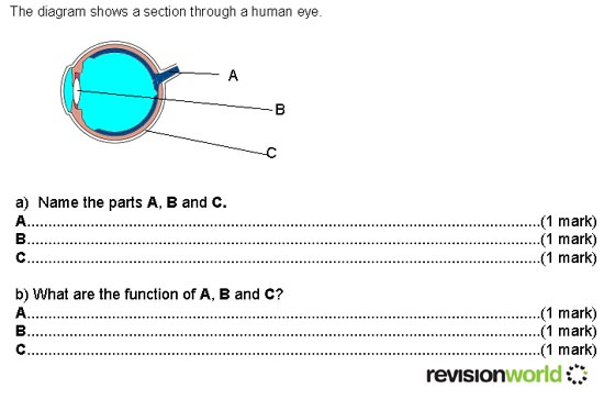 Question 1 human eye revision world question 1 human eye ccuart Gallery