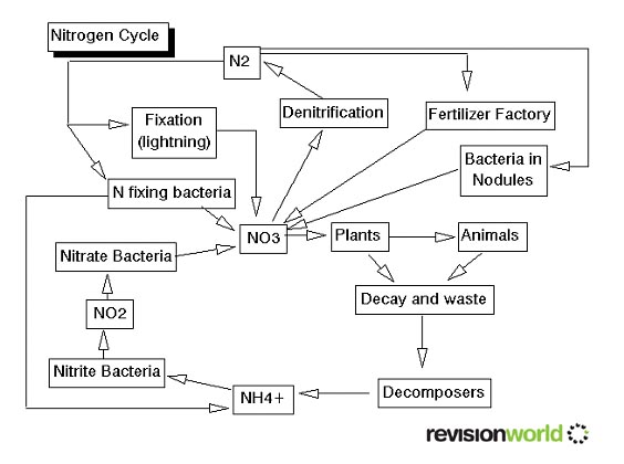 Carbon The Carbon Cycle and Nitrogen Cycle – Nitrogen Cycle Worksheet Answers