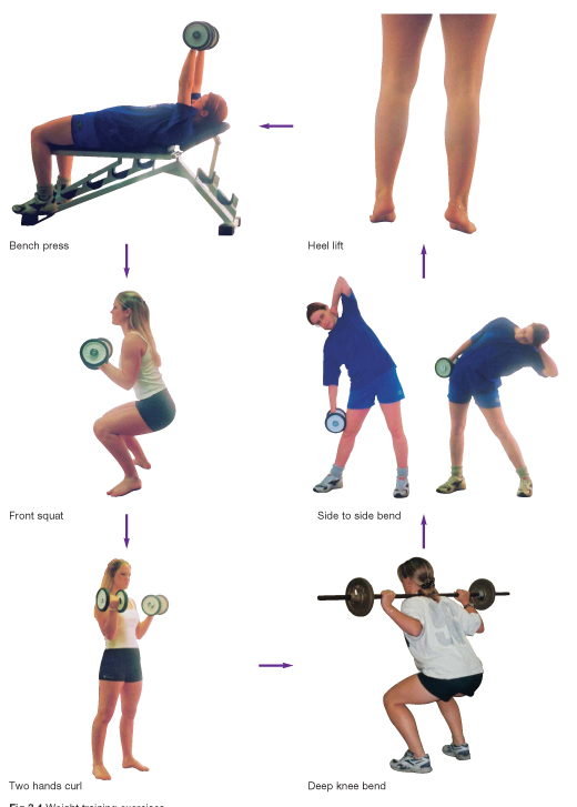 Weight Training | gcse-revision, pe-physical-education ...