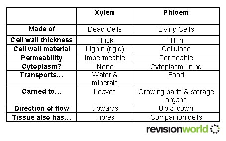 Xylem vs. Phloem: What's the Difference?