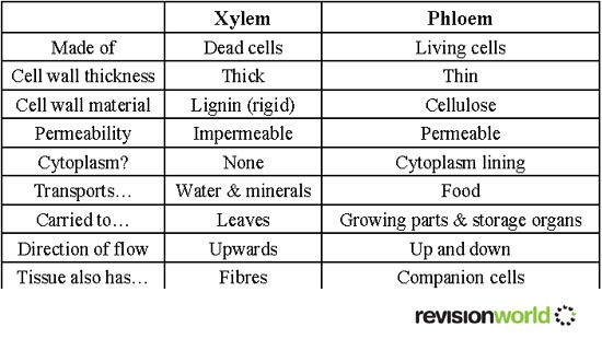 compare and contrast xylem tissue and Vascular plants are those plants which have specialized conductive cells, xylem and phloem both these tissues make up the vascular bundles comparison chart xylem.