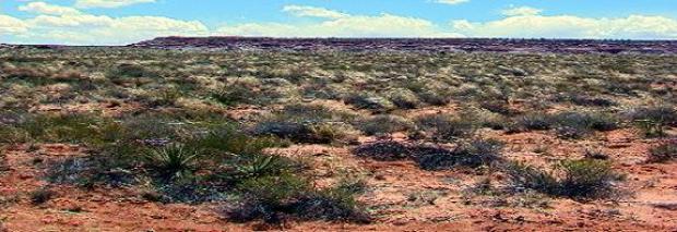 Arid and Semi Arid Environments | Revision World